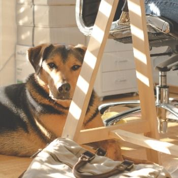 La tendance est au «Bring Your Own Dog» au bureau